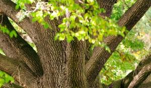 Holzarten im Verlgeich